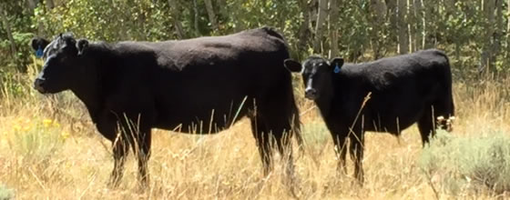 Clay Land Livestock Ranch for Sale